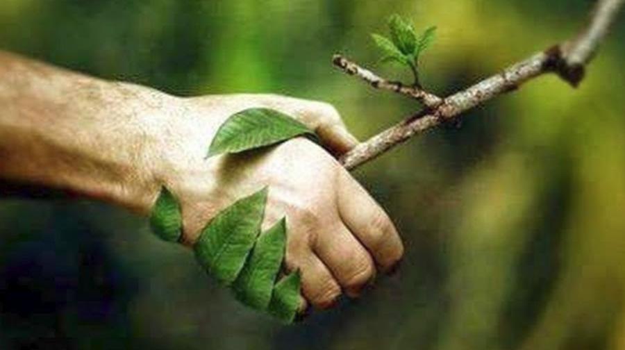shake-hand-tree